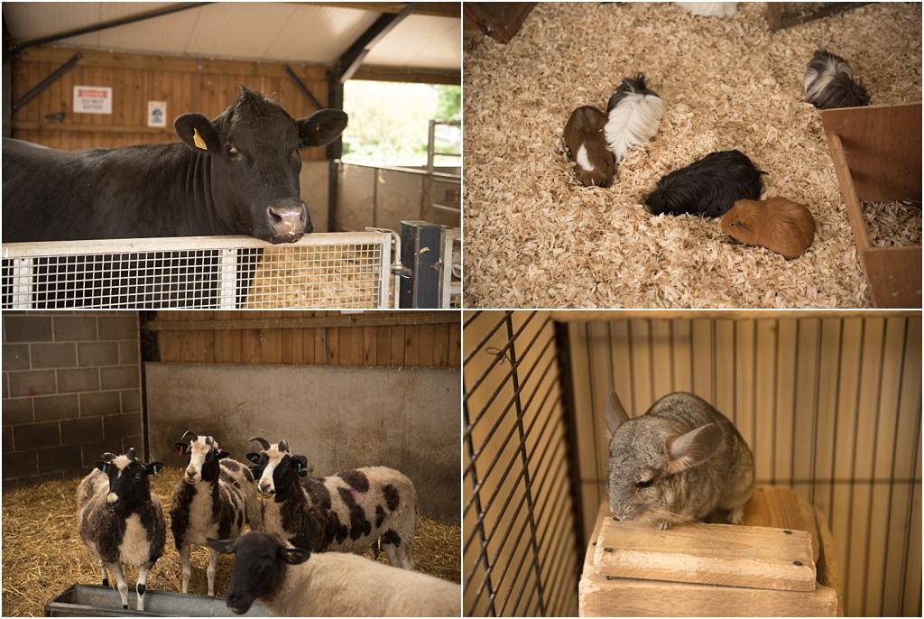 Tiny Baby Studio Newcastle Newborn Photography Ouseburn Ouseburn Farm Animals